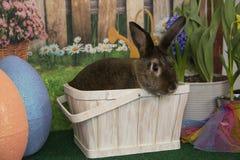 在篮子的复活节兔子兔子用色的鸡蛋和开花的春天开花 库存照片