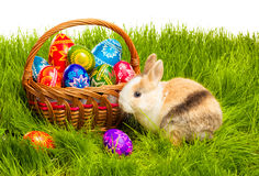 在篮子的复活节彩蛋和兔宝宝 免版税库存照片