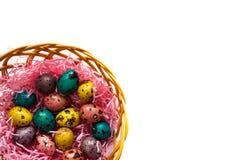 在篮子的复活节五颜六色的鹌鹑蛋 免版税图库摄影