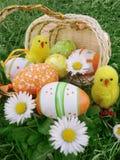 在篮子的复活节彩蛋与雏菊和鸡 免版税库存图片