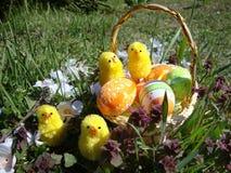 在篮子的复活节彩蛋,与鸡 免版税图库摄影