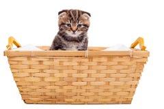 在篮子的小猫 免版税库存照片