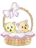 在篮子的小猫 库存图片