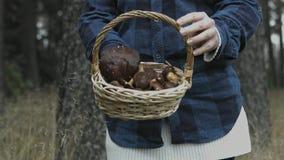 在篮子的所有蘑菇 影视素材