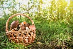 在篮子的收获棕色盖帽牛肝菌蕈类 免版税库存照片