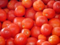 在篮子的新近地被采摘的红色蕃茄 库存照片