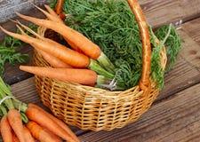 在篮子的新鲜的有机红萝卜 免版税库存照片