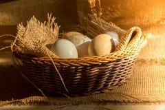 在篮子的新鲜的有机鸡蛋包裹与粗麻布织品材料和与直接早晨阳光光线影响 库存照片