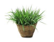 在篮子的新鲜的草 免版税库存图片