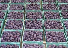 在篮子的新鲜的蓝莓在显示在农夫市场上。增长在Corbett,俄勒冈,美国 库存图片