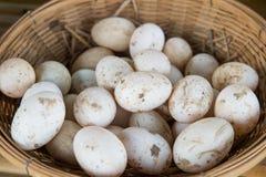 在篮子的新鲜的鸭子鸡蛋 免版税库存照片