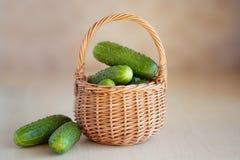 在篮子的新鲜的黄瓜 免版税图库摄影