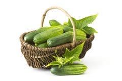 在篮子的新鲜的黄瓜 库存照片