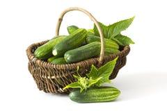 在篮子的新鲜的黄瓜 免版税库存照片