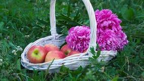 在篮子的有机苹果在夏天草 鲜花本质上 股票视频