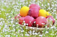 在篮子的果子 库存图片