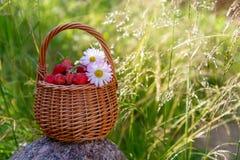 在篮子的森林草莓 免版税库存图片