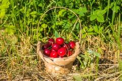 在篮子的樱桃 库存图片