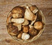 在篮子的牛肝菌蕈类可食国王牛肝菌 免版税库存图片