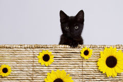 在篮子的猫用向日葵 免版税库存图片