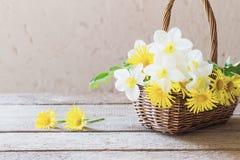 在篮子的白色和黄色花 免版税库存图片