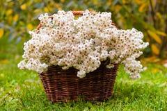 在篮子的白花 免版税库存照片
