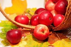 在篮子的红色苹果 库存图片