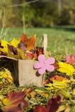 在篮子的美丽的下落的秋叶 库存照片
