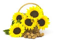 在篮子的美丽的向日葵花束 库存图片