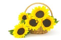 在篮子的美丽的向日葵花束 图库摄影