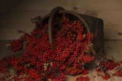 在篮子的花揪分支 免版税库存图片