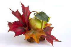 在篮子的苹果计算机和槭树叶子。 图库摄影