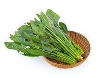 在篮子的菠菜叶子 免版税库存照片