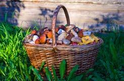 在篮子的蘑菇 查出的森林采蘑菇白色 免版税图库摄影