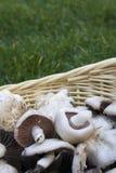 在篮子的蘑菇 免版税库存图片