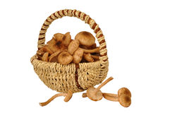 在篮子的蘑菇 免版税图库摄影