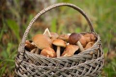 在篮子的蘑菇 图库摄影