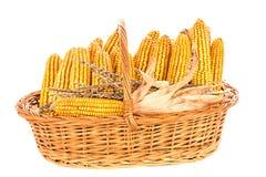 在篮子的被收获的玉米 库存照片