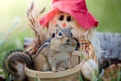 在篮子的逗人喜爱的东部花栗鼠在秋天季节性场面 免版税图库摄影