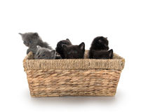 在篮子的逗人喜爱的小猫 免版税库存图片