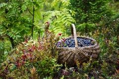 在篮子的野生莓果 免版税库存照片