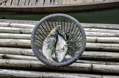 在篮子的鲜鱼在北碧,泰国 库存图片
