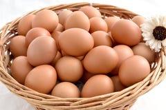 在篮子的鸡蛋在白色背景填装了隔绝 免版税图库摄影