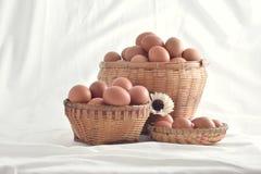 在篮子的鸡蛋在白色背景填装了隔绝 库存图片