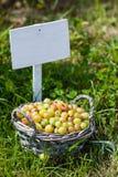 在篮子的鹅莓在夏天 免版税库存照片