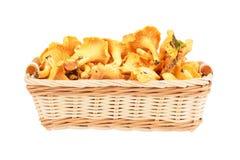 在篮子的黄蘑菇蘑菇 库存图片