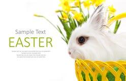 在篮子的滑稽的白色兔子 库存图片