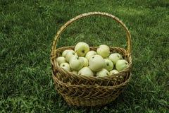 在篮子的黄色苹果 免版税库存照片