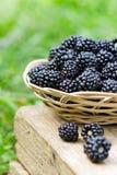 在篮子的黑莓 免版税库存照片