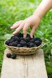 在篮子的黑莓 免版税图库摄影